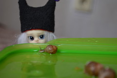DSC_0327 (Vlastelin Nichego) Tags: momo bjd dz dollzone