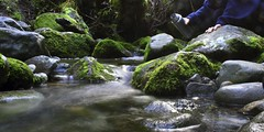 120429.MT TARANAKI (John Q2008) Tags: nationalpark nz taranaki waingongoro