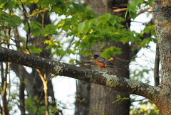 088 (Daniele_Sharpe) Tags: nature birds spring wildlife newhampshirehiking nhwildlife