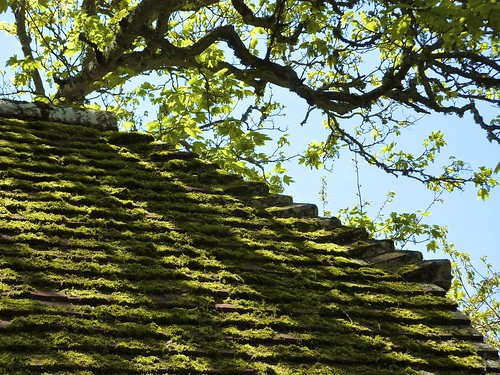 Mossy roof, Sussex