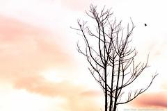 Cu inventado... (Junior AmoJr) Tags: color sol brasil photoshop canon natureza chuva pb paisagem junior cor snapfish gettyimages lightroom t3i atibaia itsnoon gettyimagesbrazil amojr junioramojr crowdart oliveirajunior riafestival