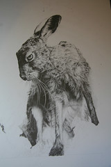 Hare (Vivienne Coleman) Tags: blackandwhite print hare wildlife commission pencildrawing
