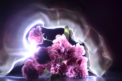 Pintando con luces (ndrea Mar) Tags: pink flowers luces con pintado