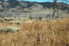 169 - Coyote (Scott Shetrone) Tags: coyote animals events places yellowstonenationalpark mammals 7th anniversaries wymoing