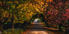 Road to Utopia (Laurent jL Photography) Tags: road sunset tree nature landscape photography nikon australia bluemountains d800 2013 autunmcolours