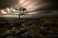 Re-processed (John Ormerod) Tags: longexposure light tree rain weather silhouette landscape photography nikon wind pavement yorkshire elements limestone hawthorn d7000 twistletonscar