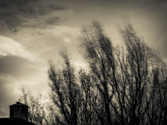 Pochi riferimenti_4841A (MITZIO.) Tags: sky tree tower church alberi torre wind chiesa cielo vento 2013 mitzio