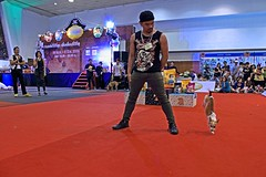 Breakdance Handstand (kwang56) Tags: dog chihuahua cute bird goldenretriever puppy expo snake shihtzu pug parrot chow cockatoo dogshow macaw