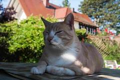 STANLEY SUCHT SCHATTEN (rentmam1) Tags: cats tiere katzen