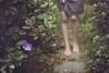 209 (m.clemm) Tags: portrait woman selfportrait flower green texture nature girl headless self garden purple legs path walk steps outoffocus step faceless 365 selfie