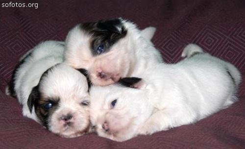 Filhotes de cachorros 63