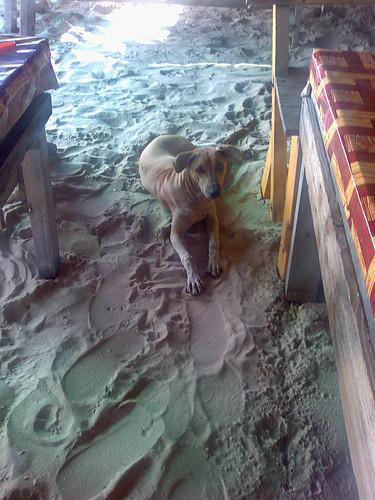 Fish-seller's dog