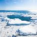 Ilulissat_6533.jpg