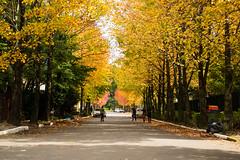 Folhas de Outono (rudimargrass) Tags: folhas rua arvores outono canela