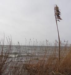 Hindens Rev (autumnal fires) Tags: sweden sverige dalbosjön hindensrev vänern lake götaland terminalmoraine scandinavia geotagged
