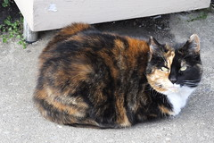 DSCF8758 (Moldovia) Tags: pet animal cat feline pointandshoot catalog pointshoot catpix catspotting catmoments catnipaddicts catsunleashed fujifilmfinepixhs50exr