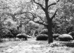 the enchanted forest...where wild creatures roam... (LotusMoon Photography) Tags: wild blackandwhite bw monochrome forest landscape lights shadows artistic outdoor imaginary