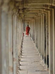 Monk (Cassio Piccolo) Tags: monk monge red budhism budismo buda religion temple asia angkor cambodia