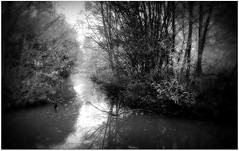(Riik@mctr) Tags: gatley carrs nature reserve woodland scrubland grassland ponds woods meadows brook wildlife trees countryside stockport cheshire nokia n95 fone phone blackandwhite monochrome texture abstract serene surreal water