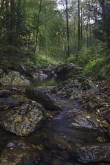 Dreilgerbach (Kevin Kistermann) Tags: grn eifel eifelexplorers germany geographic national nature natur nationalpark weroamgermany we roam deutschland wasser wald wood water
