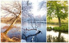 seasons change (Gelan') Tags: triptych triptyque season saison colors paysage landscape autumn winter spring summer automne hiver printemps t trois 3 nature tree arbre