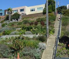 """Athens Avalon Green Space"", staircase, San Francisco (David McSpadden) Tags: athens avalon green space sanfrancisco staircase"