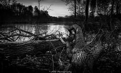 DSC_0826 (A2J Photography) Tags: landscapephotography blackandwhitephotography blackandwhite tree pond wood thenetherlands a2jphotography