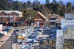 2016-10-05_Katoomba-2-OPT (marcus77clark) Tags: flowers wentworth falls leura katoomba mountains everglades tomah national park nsw australia waratah
