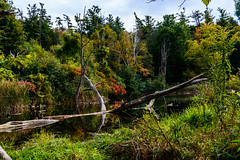 Highland Creek (vernonbone) Tags: 1855kitlens 2016 autumn d3200 highlandcreek lens october ontario closeup colors longexposure nikon outside street water
