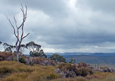 Clouds gathering (LeelooDallas) Tags: australia tasmania cradle mountain landscape dana iwachow fuji finepix hs20 exr dove lake water cloud sky tree forest