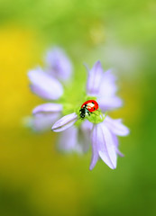 Campanula (ElenAndreeva) Tags: flowers forest spring color sun light summer bokeh beautiful cute colors green 500px insect canon garden purple soft dream colorful sweet focus bug amazing nature macro flower campanula ledybug
