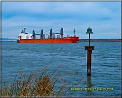 Global Wisdom 1601 LR (bradleybennett) Tags: cargo vessel ship shipping delta water river ocean tanker antioch port stockton global wisdom