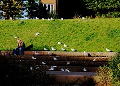 Feathered Friends.. (Evergreen2005) Tags: gulls exeter solitary man