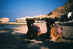 Muscat (cranjam) Tags: lomo lca lomography film slide xpro kodak elitechrome100 sultanateofoman oman middleeast shangrilabarraljissah shangrila hotel beach spiaggia palmtrees palme cammelli dromedari camels mare sea gulfofoman