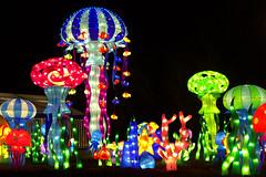 We found Nemo! (StripeyAnne) Tags: leeds stripeyanne yorkshire magicallanternfestival roundhaypark lanterns light nemo