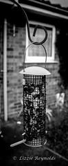 Day 280, 2016, a photo a day. (lizzieisdizzy) Tags: outside outdoors garden grass feeder bird birds wildlife avian wild holders nuts raisins food mono monochrome blackandwhite