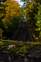Hamburg October mornings (Vagabundina) Tags: nikon d5300 germany hamburg winterhude stadtpark autumn nature leaves trees wood railroad scenery