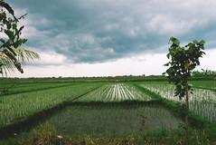 P1040804-Edit (F A C E B O O K . C O M / S O L E P H O T O) Tags: bali ubud tabanan villakeong warung indonesia jimbaran friendcation