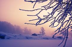 Ice cold (BirgittaSjostedt) Tags: winter frost ice cold snow dark morning sun tree silhouette light magic birgittasjostedt magicunicornverybest ie