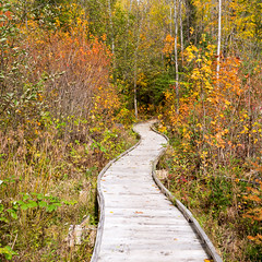 I was never (Wicked Dark Photography) Tags: landscape wisconsin autumn boardwalk fall forest nature path trail walkway woods
