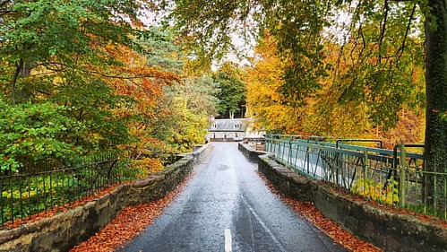 Falls of Feugh Beautiful autumn colour's on the bridge. I edited out the  signs as they were distracting. ☺👌 #banchory #fallsoffeugh #autumn #leaves #autumncolors #nature #textures #aberdeenshire #beautifulscotland #visitaberdeen #visitaberdeenshi