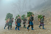 K0485.0214.Ngải Thầu Thượng.Y Tí.Bát Xát.Lào Cai (hoanglongphoto) Tags: asia asian vietnam northvietnam northwestvietnam life people dailylife outdoor morning mist spring hanhipeople women grouppeople womens hanhiwomens hill hillside tree trees walkingontheroad walking go canon canoneos1dsmarkiii tâybắc làocai ytí bátxát ngảithầuthượng conngười cuộcsống đờithường buổisáng mùaxuân sươngmù phụnữ nhữngngườiphụnữ ngườihànhì phụnữhànhì đibộ đibộtrênđường ngọnđồi sườnđồi cây zeissdistagont3518ze
