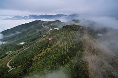 DRONE ~~ Fly above clouds (Shang-fu Dai) Tags:  taiwan        ginkgo seaofclouds clouds dji phantom3advanced p3p  sky