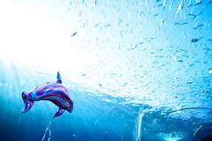 New Species (H.H. Mahal Alysheba) Tags: aquarium fish water sky japan indoor nikon d800 afs nikkor 2485mmf3545