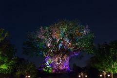Tree of Life (lefthandm3dia) Tags: animalkingdom disney treeoflife disneyworld waltdisneyworld
