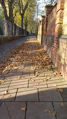 Autumn leaf fall in Stepney Green 2016 (Carol B London) Tags: autumn fall e1 leaf leaves steoney stepneygreen