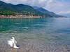 Salo seen from a beach at Lago di Garda. (elsa11) Tags: salo lagodigarda lakegarda gardameer gardasee duck eend bird lake garda see meer brescia italy italia italië