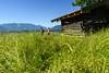 Hütte im Murnauer Moos (murnau_am_staffelsee) Tags: murnauermoos alpen murnau oberbayern bayern dasblaueland landkreisgarmischpartenkirchen paar