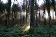 Welcome to the Magical Forest (yarin.asanth) Tags: happyness fun enjoy entertainment nonsence dude yarinasanth gerdkozik rays rayoflight sunbeams sun kingdom prince yarin kudjuhns dittchendattchen clamottenanton rotz lugana forrest forest magic magical witch castle fairytalestories