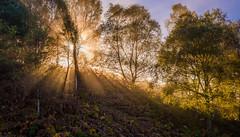 Rays of light (Sarah-86) Tags: nikond810 landscape scotland autumn mist trossachs highland trees woodland